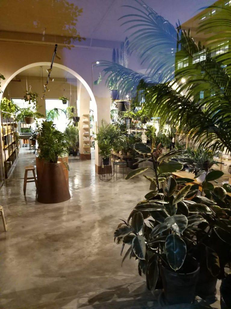 Folha Plant Shop, gardening, Urban Plants, City Nursery, Urban Jungle, Plants Cape Town, Garden Shop, House Plants, Indoor Plants