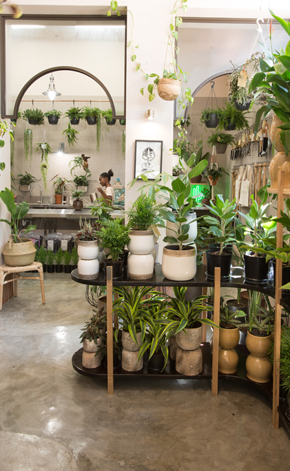 Folha, Folha Plant Shop, Urban Plants, City Nursery, Urban Jungle, Plants Cape Town, Garden Shop, House Plants, Indoor Plants, gardening